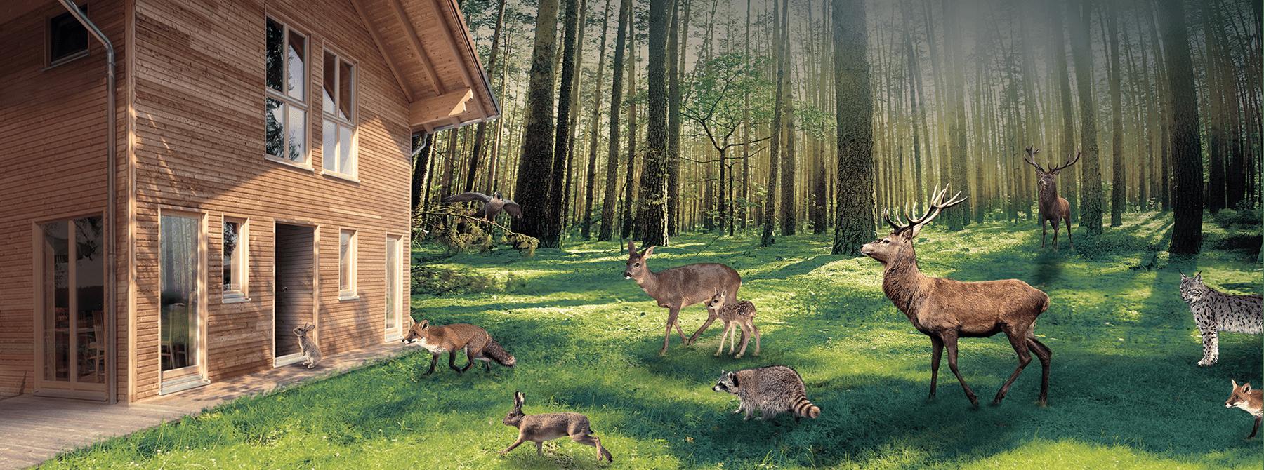 ^ Wohnen im besten Klima - Sonnleitner.de - Bauen Sie Ihr Holzhaus ...